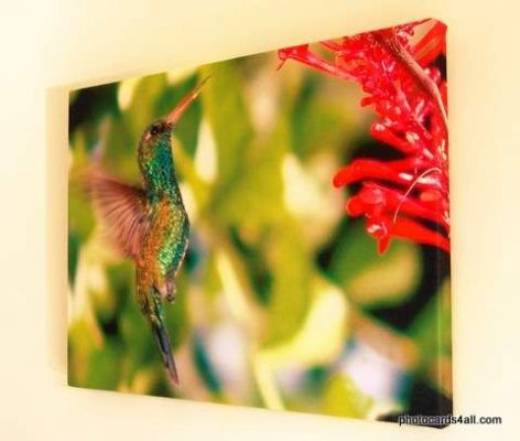 example of canvas print (Humming Bird) original photo by Tony Somervell
