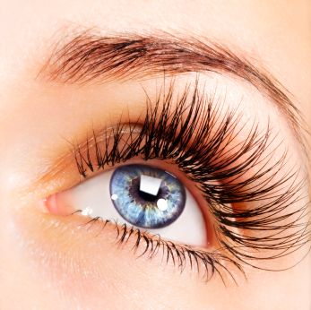 Eyelash Courses