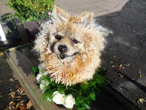 Funeral flower sculpture,pomerainian dog made with flowers/natural materials.