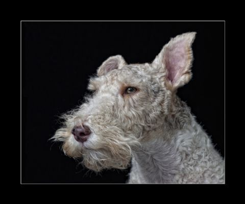 Award winning Pet Photography