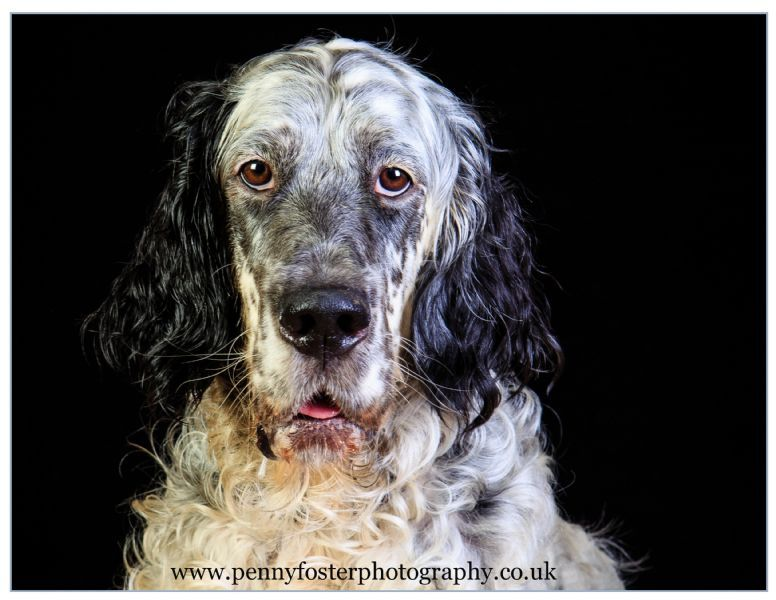 Fergus, from my pet shoots