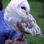 Let Crystal the barn Owl melt your heart