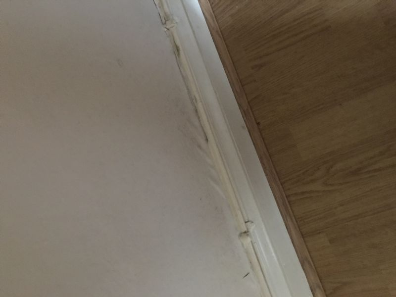 damp proofing company needed in cardiff 211519. Black Bedroom Furniture Sets. Home Design Ideas