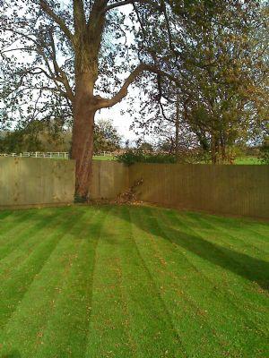 Cleancut lawn and garden services gardener in llansamlet for Lawn and garden services
