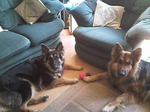 Dog Training Sittingbourne