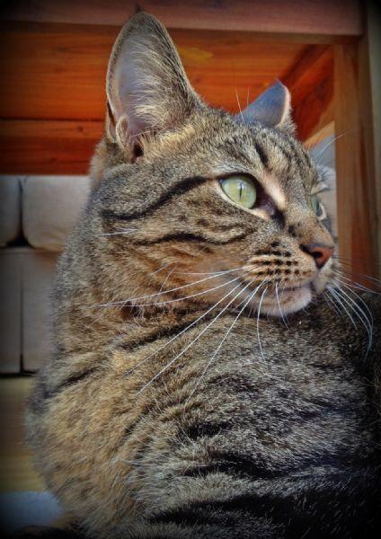 candyfloss cats pet sitter in glasgow uk. Black Bedroom Furniture Sets. Home Design Ideas