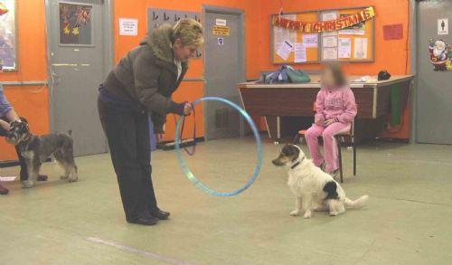 Dog Training Classes Newcastle Upon Tyne