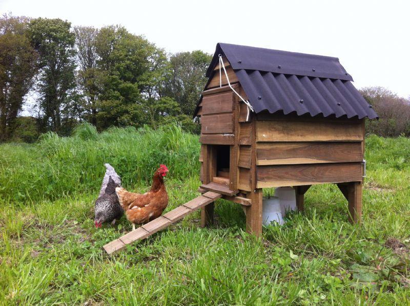 Tom S Hen Houses Pet Supplier In Ruthvoes St Columb Uk