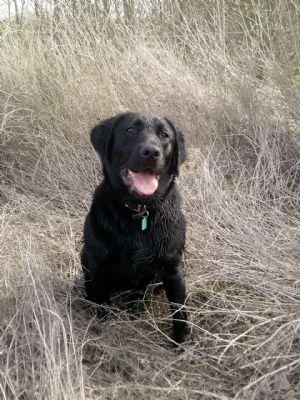 Swithens Farm Dog Training