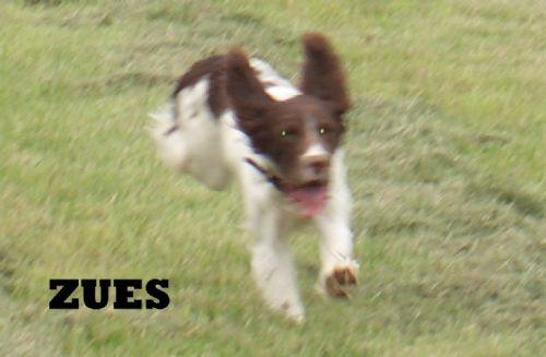 Dog Kennels Abingdon