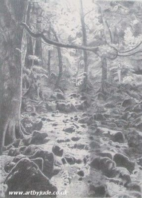 Llanrhaeadr Forest Pencil Drawing - Artists Oswestry