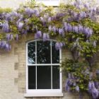 Sash Window Services - Roseview Windows