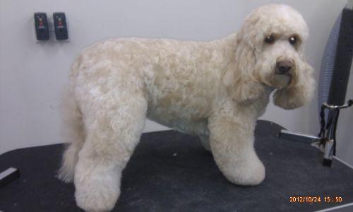 Fur Dog Grooming Preston