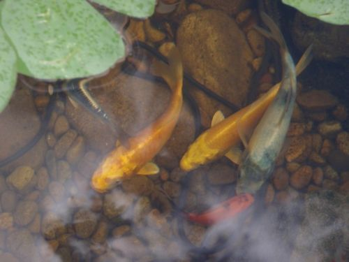 Aquaflora landscapes landscape gardener in st pauls for Professional pond cleaners