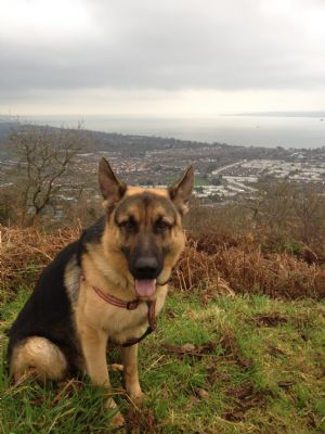 Dog Rescue Centres Nottinghamshire