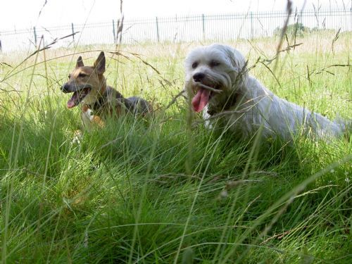 Reality Dog Training Twickenham