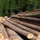 Biomass Fuel - The Luxury Wood Company