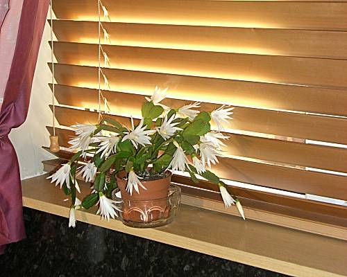 50mm Wooden Venetiab blind in Maple - Window Blind Suppliers Northampton