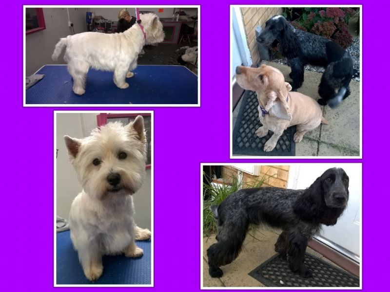 Snip And Clip Dog Grooming