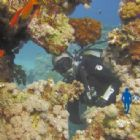 Scuba Diving - Immerse School of Diving