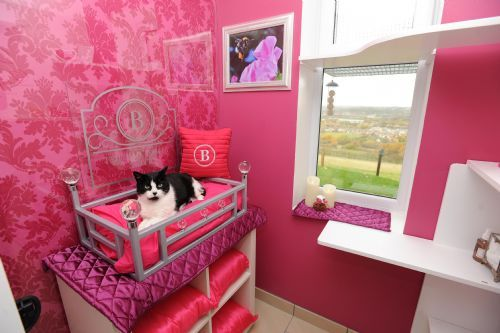 The Ings Luxury Cat Hotel Cattery In Thornhill Dewsbury