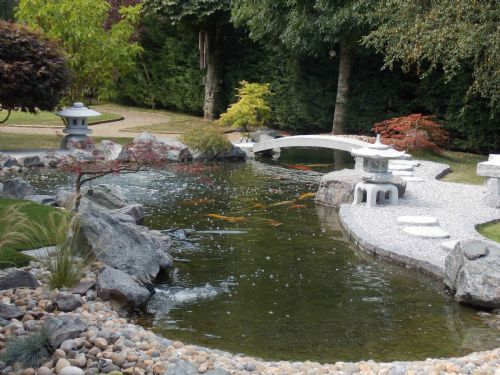 The nishikigoi centre pond supplies company in hawkhurst for Japanese koi centre