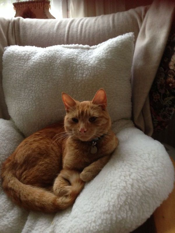 cuddles cat care   pet sitter in mancetter atherstone uk