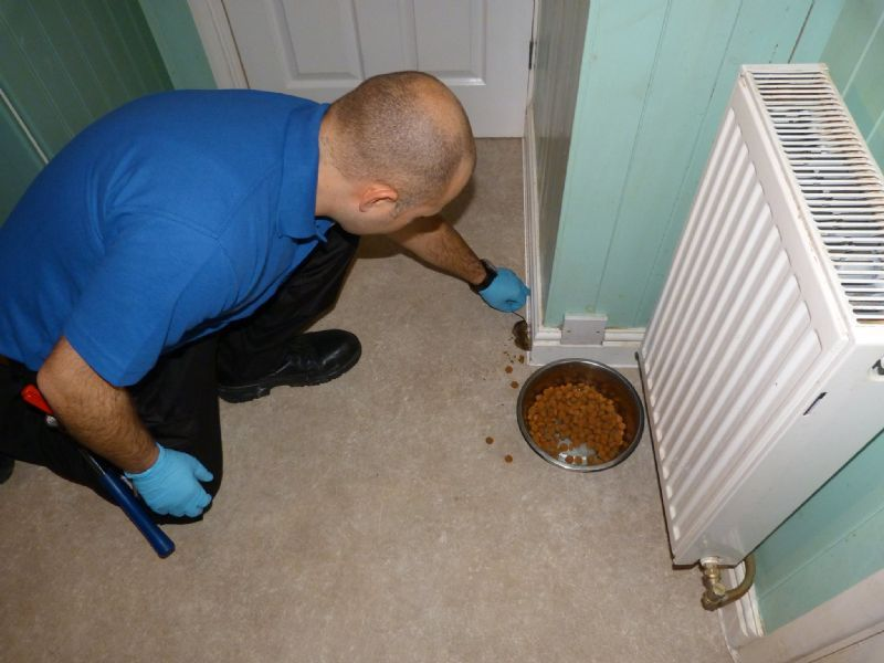 Rodent Property Services Limited