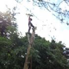 Arboricultural Services - Scott Davies Tree Surgery