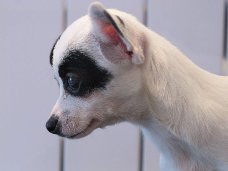 Dog Coat Fenwick Uk