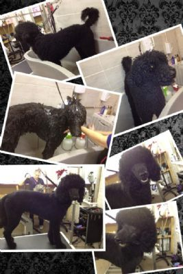 Dog Grooming St Andrews