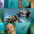 Scuba Diving - Bramston Sub Aqua Club