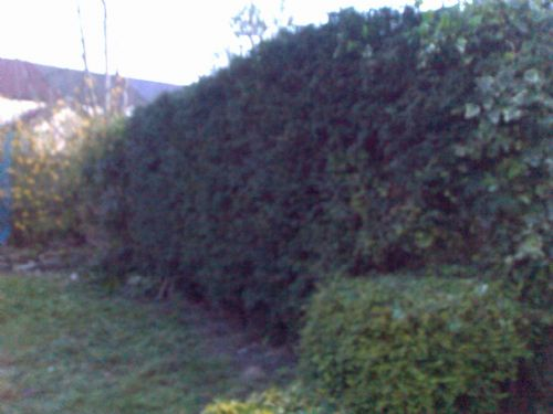 Small tree boarder cut to spec. - Home and Garden Maintenance Companies Cardiff