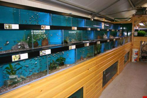 Maidenhead Aquatics Reading Aquarium Supplier In