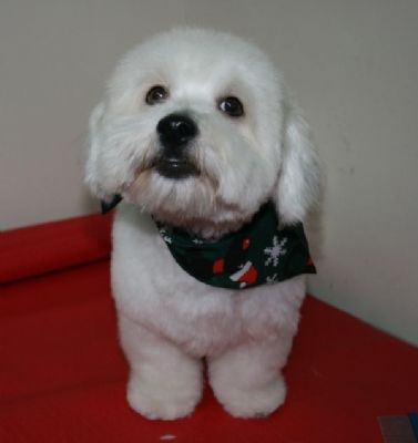 Cute Cotton  - Pet Groomers Worthing