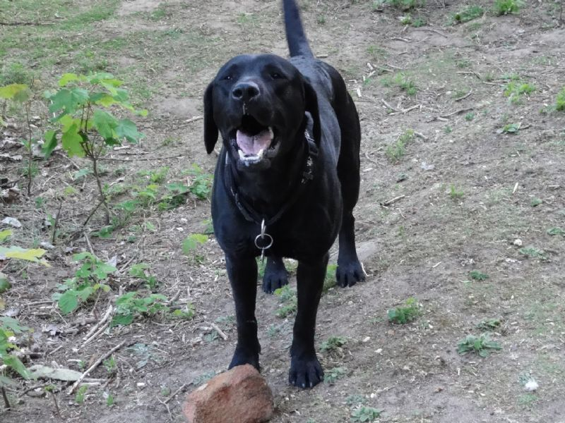 Dog Kennels Peterborough Area