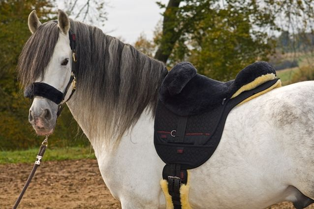 Horse Dream Uk Ltd Uckfield 4 Reviews Equestrian