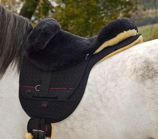 horse dream uk ltd uckfield 4 reviews equestrian