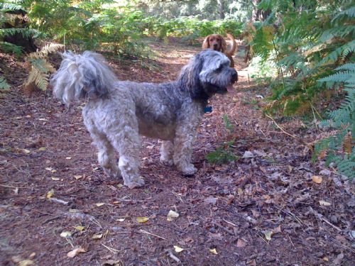 Dog Sitters In Stafford Uk