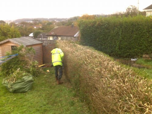 Image Result For Acorn Gardening Services Swansea
