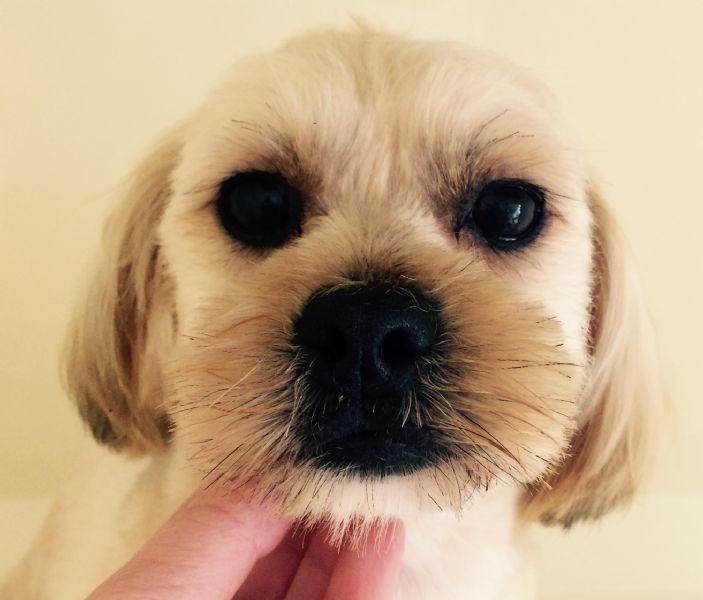 Dog Training Ashby De La Zouch