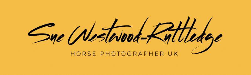 Horse Photographer uk, Sale | 1 review | Pet Photographer - FreeIndex
