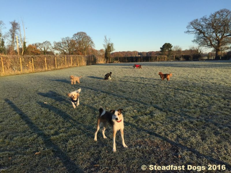 Small Dogs In Shrewsbury