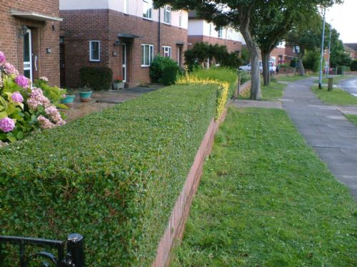 just lawns and gardens  peterborough