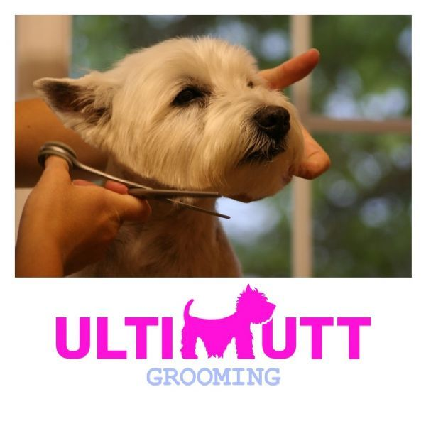 Pets At Home Dog Grooming Taunton