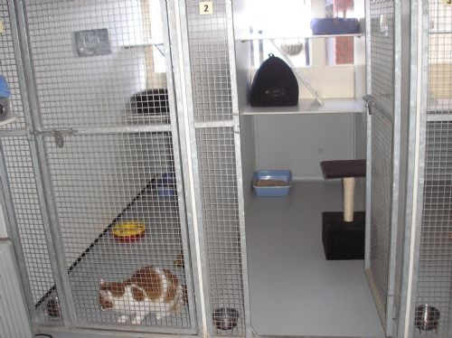 Lyde Luxury Boarding Kennels Amp Cattery Basingstoke