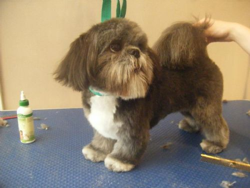 Dog Grooming Bexhill