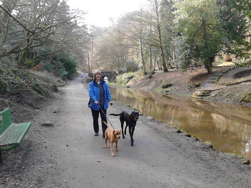 Dog Kennels In Oswaldtwistle