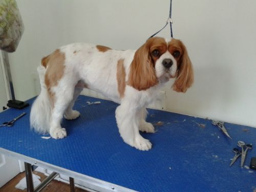 Mucky Pups Dog Grooming