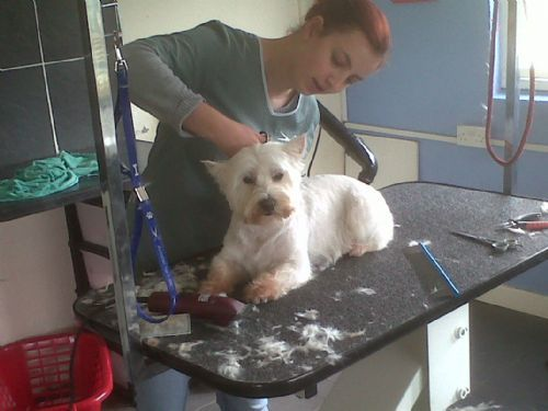 In The Dog House Grooming Parlour Bristol Dog Grooming